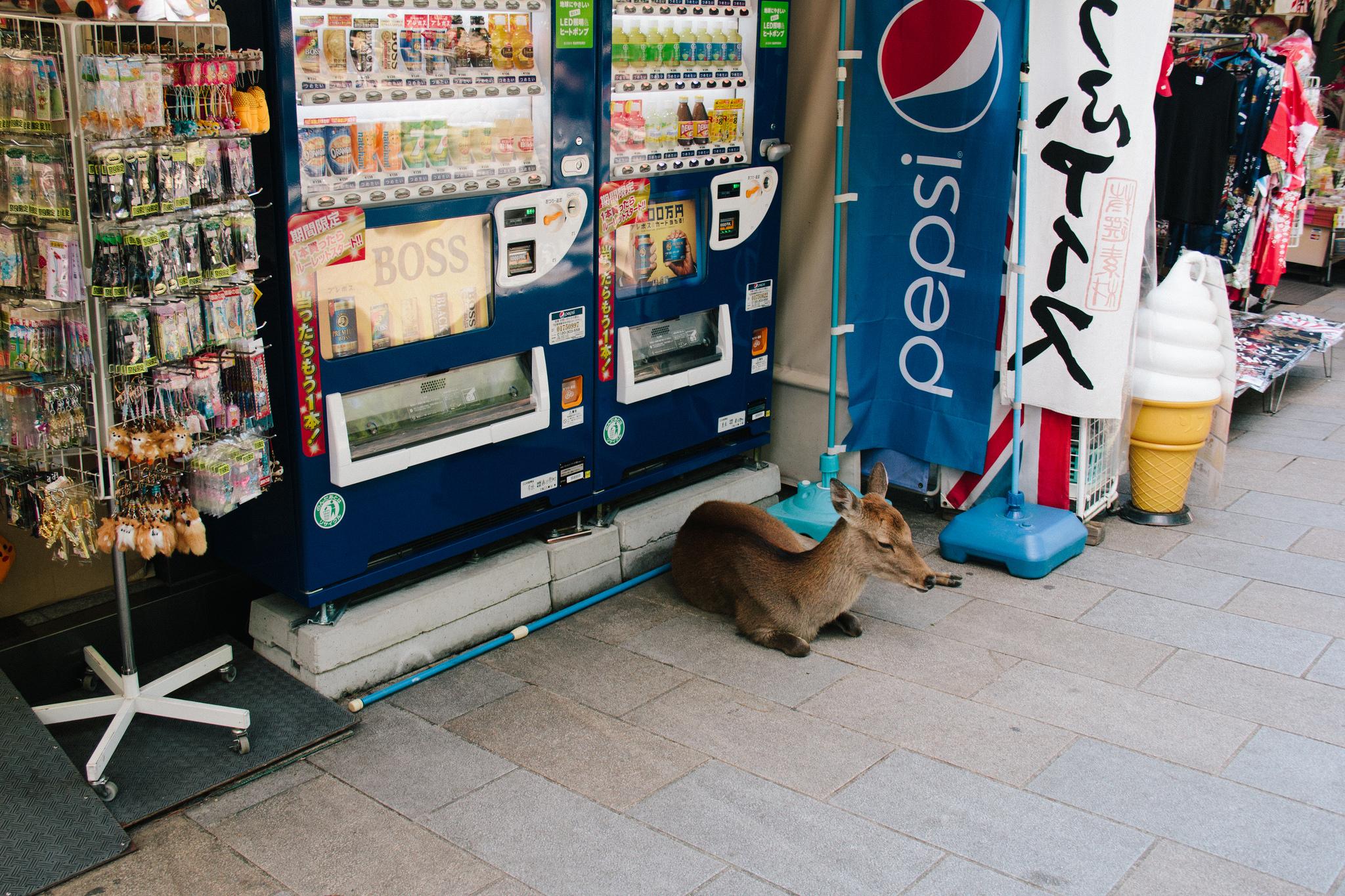 Japan: Exploring Nara - Cocoskies | Illustration, design & travel blog