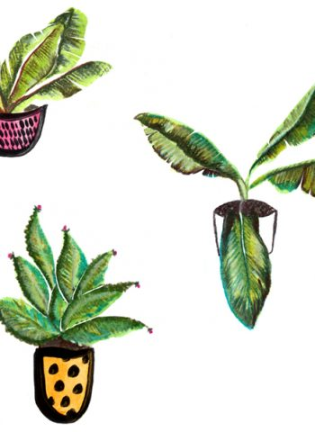 Plant illustration - Cocoskies