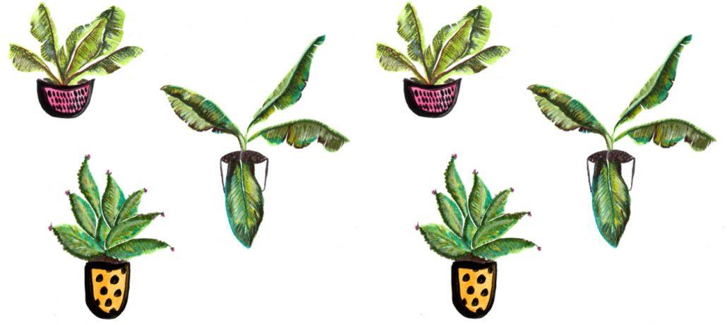 Plant illustration - Cocoskies