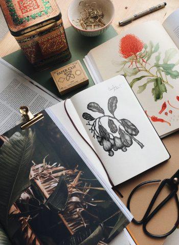Fineliners for Botanical Illustration - Cocoskies | Illustration, design & travel blog