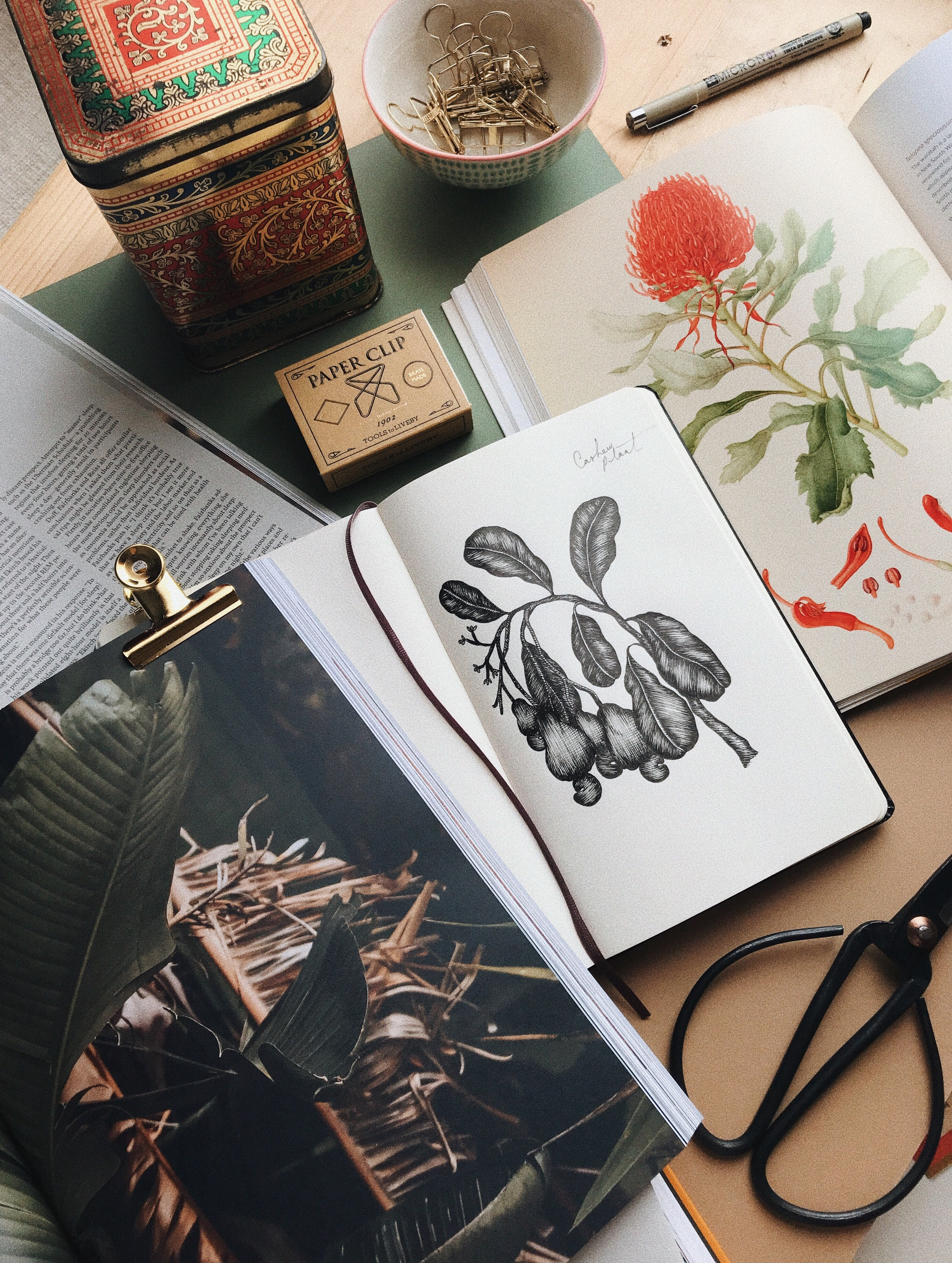 Fineliners for Botanical Illustration - Cocoskies | Illustration, design & travel blog