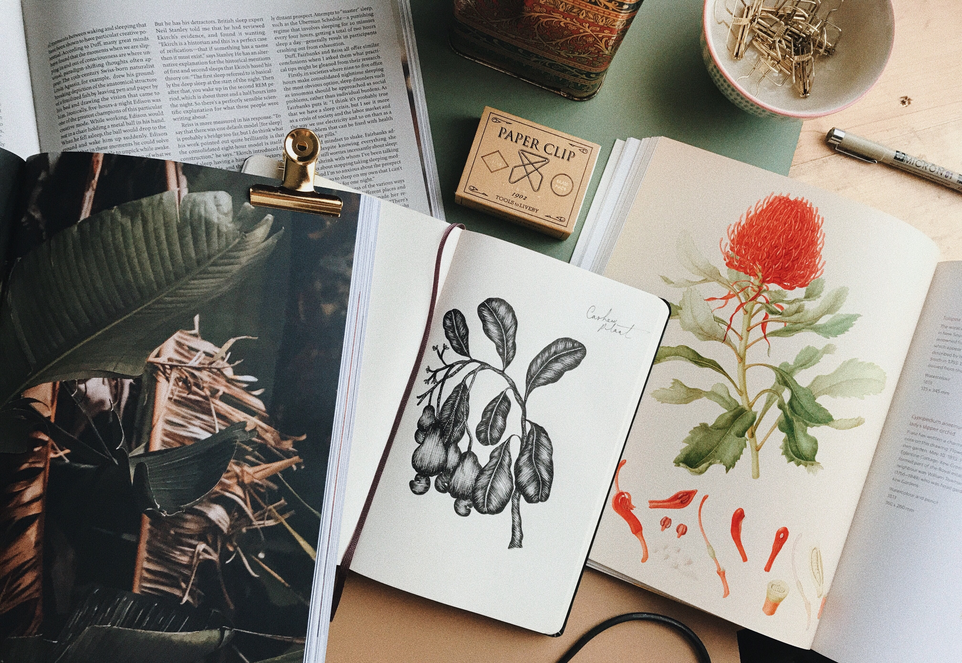 Fineliners for Botanical Illustration - Cocoskies | Illustration, design & travel